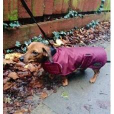 Dachshund Waterproof and Fleece dog coat