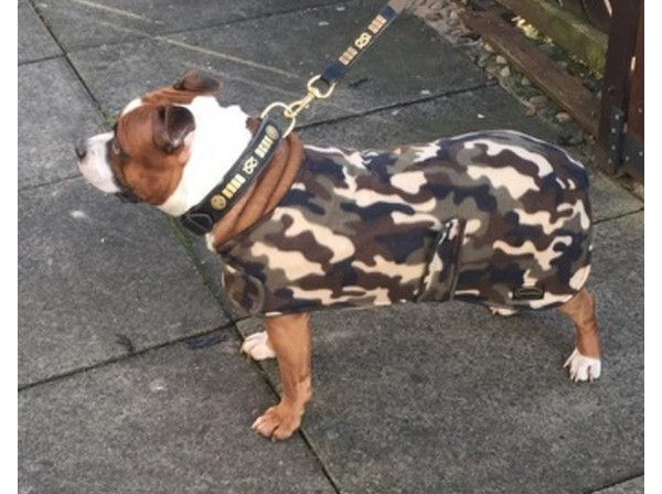 StaffStaffordshire Bull Terrier