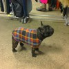 french bulldog  Printed Double Fleece dog coat