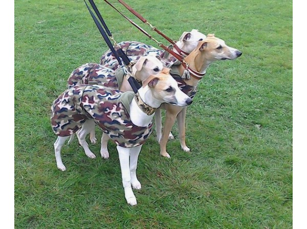 whippet army